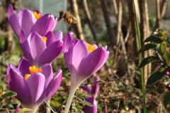 Nina Rattay verbringt gerne Zeit im insektenfreundlichen Familiengarten.