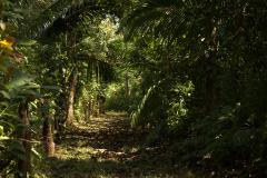 Für Mensch und Natur: Echter Wald mit ökologischem Mehrwert