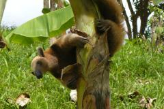 Biodiversität: In unseren Wäldern leben zahlreiche Tiere und Pflanzen, die andernorts selten geworden sind.