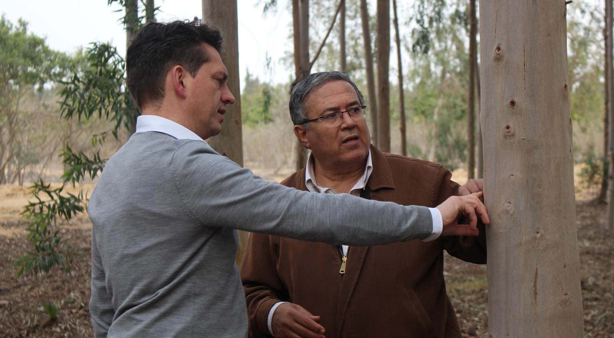 Dirk Walterspacher, Geschäftsführer der DesertTimber Consulting eG, und der ägyptische Forstwissenschaftler Dr. Hassan Hossam begutachten die Entwicklung eines neun Jahre alten Eukalyptusbaums. Foto: ForestFinance