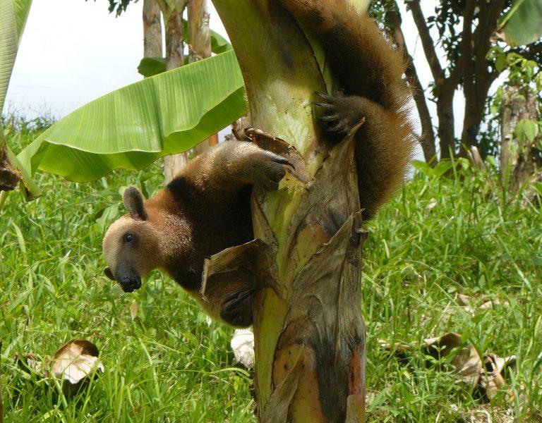 Karneval der Tiere: die schrägsten Tiere in unseren Wäldern