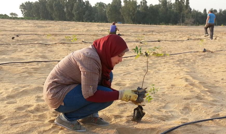 Von Wüsten zu Wäldern  – Hoffnung für Afrika