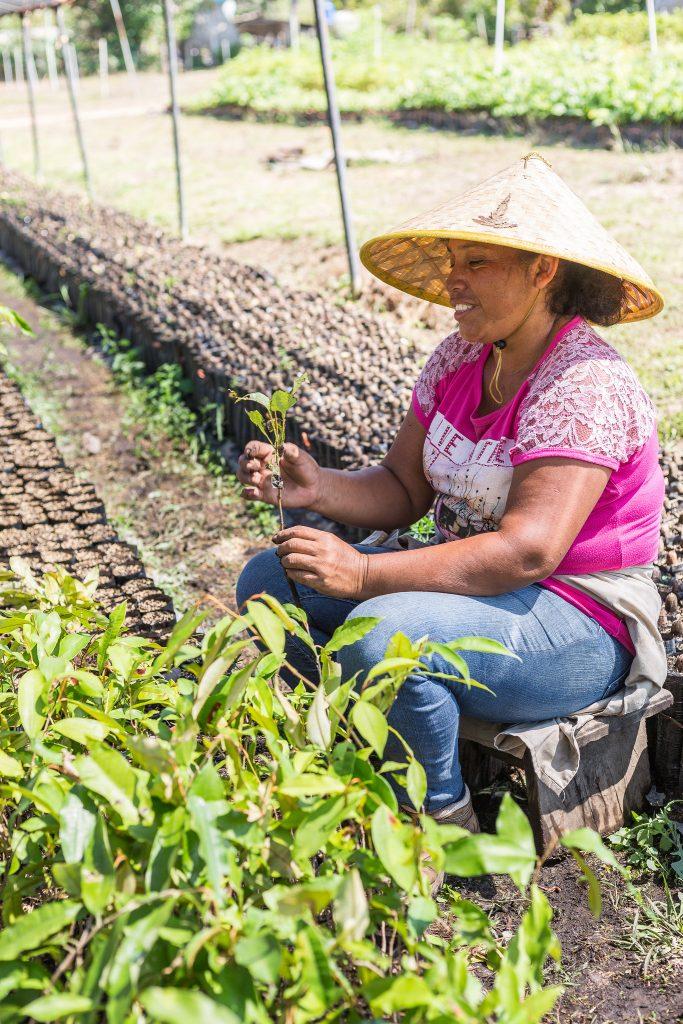 Eine ForestFinance-Mitarbeiterin pflanzt Setzlinge in der Baumschule in Las Lajas ein. Foto: ForestFinance/Katrin Spanke