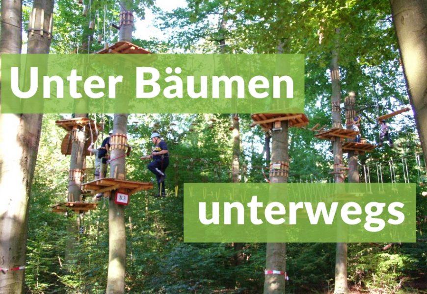 Unter Bäumen unterwegs – Ausflugstipps zum Tag des Baumes