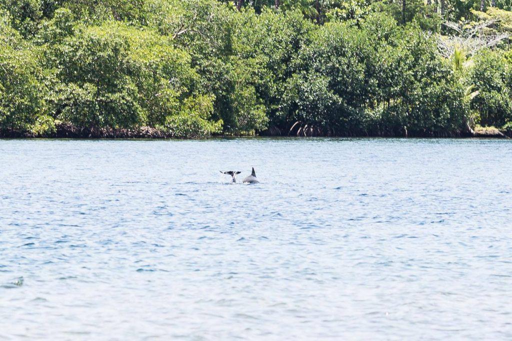 Auch der Namensgeber der Dolphin Bay schaut kurz vorbei. Foto: Katrin Spanke/ForestFinance