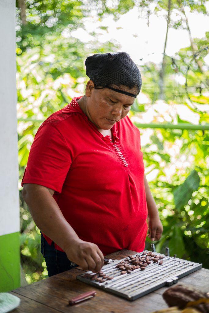 Um die Qualität der Kakaobohnen zu beurteilen, werden diese der länge nach aufgeschnitten. Foto: Katrin Spanke/ForestFinance
