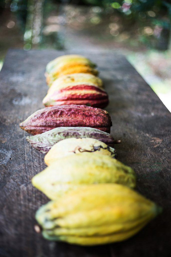 Die Kakaofrüchte sehen je nach Sorte ganz unterschiedlich aus. Foto: Katrin Spanke/ForestFinance