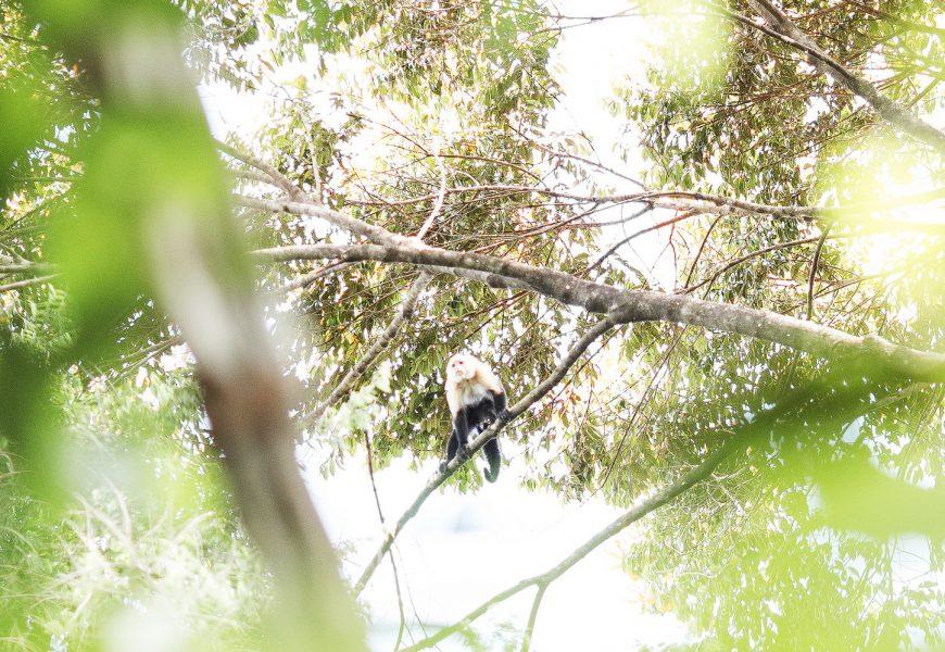 Von Bonn nach Panama: Mit ForestFinance rund um die Welt! – Teil 3