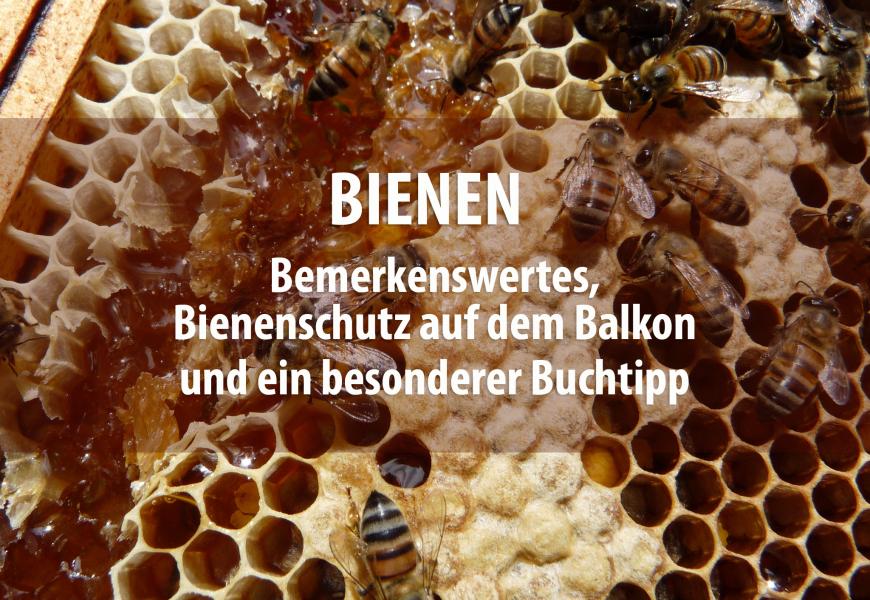 Bienenspecial: Bemerkenswertes, Tipps für den Bienenschutz auf dem heimischen Balkon und ein besonderer Buchtipp