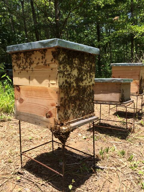 In unseren Forsten summt es gewaltig, wenn unsere kleinsten Mitarbeiterinnen umherschwirren. Die Bienenkästen stammen aus unserem eigenen Holzverarbeitungszentrum und bestehen natürlich aus nachhaltig produziertem ForestFinance-Holz. Foto: ForestFinance