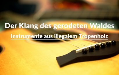 Der Klang des gerodeten Waldes – Instrumente aus illegalem Tropenholz