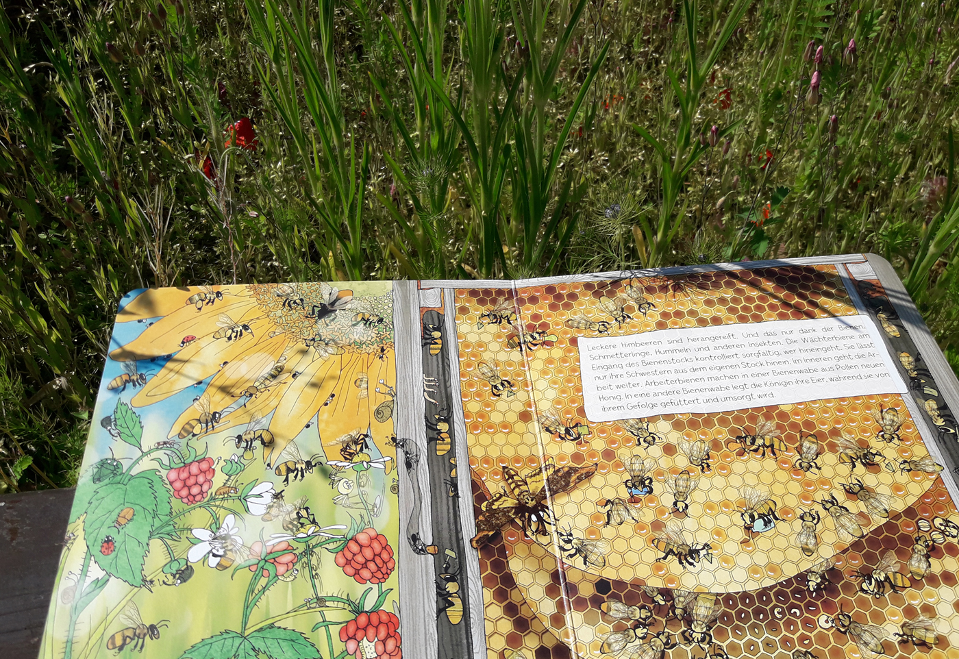 Schau, was machen die Bienen? Ein Wimmelbuch zum Staunen! Foto: Kristin Steffan/ForestFinance