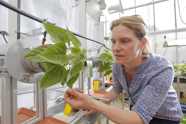 Hat den Dreh raus: Alina Schick im Labor. Foto: Universität Hohenheim/Jan Winkler