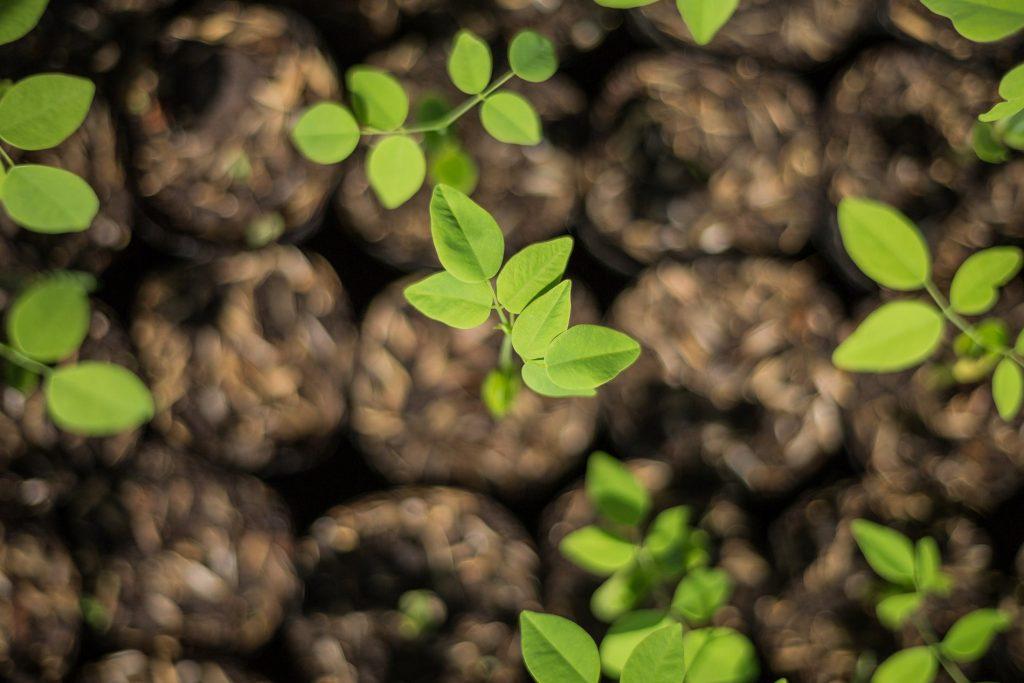 Weihnachtsgeschenke für Kunden und Mitarbeiter - wir haben nachhaltige Ideen!