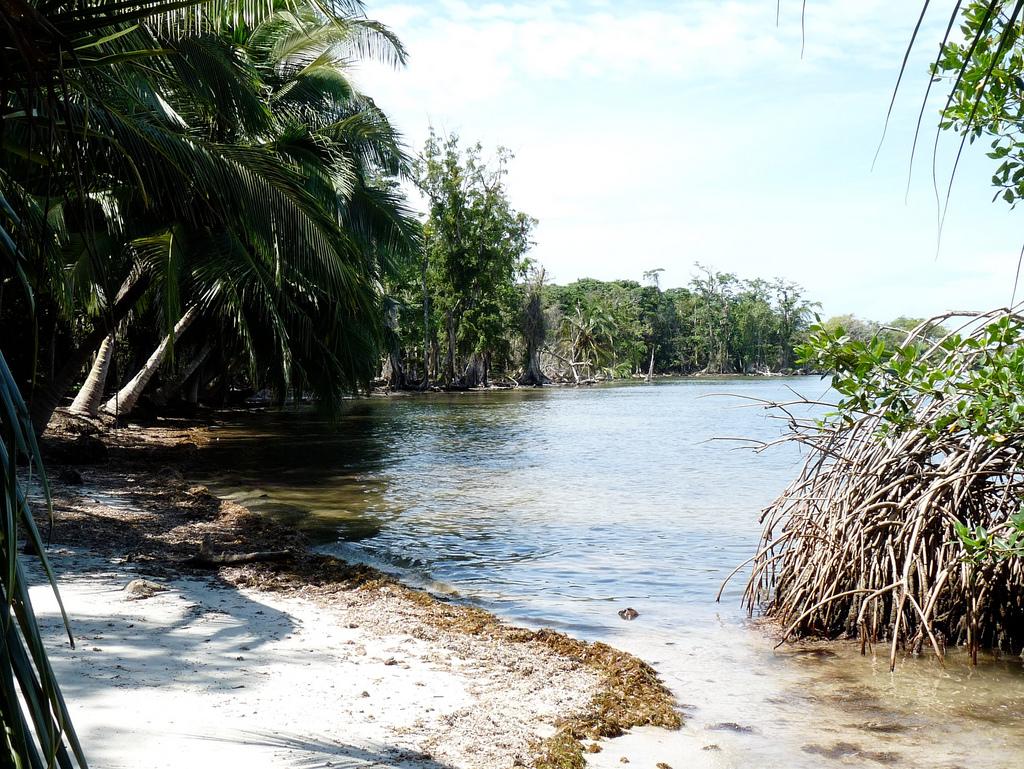 Ein tropischer Traum: Mangroven an einer Flussmündung der Karibikküste. Mangroven können aber viel mehr, als nur hübsch auszusehen - unter anderem dienen sie als Schutzschild gegen Stürme und Fluten. Foto: ForestFinance/Petra Kollmannsberger