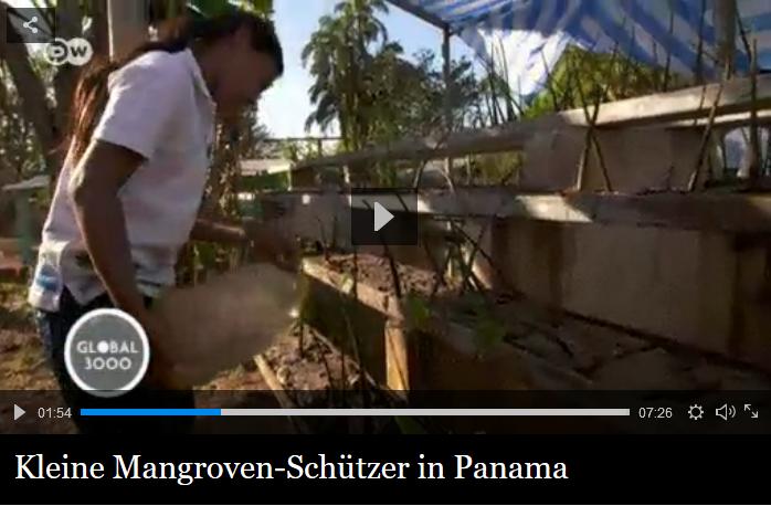 Ein tolles Projekt: Der Film der Deutschen Welle zeigt, wie junge Mangroven-Schützer Panama den richtigen Weg vormachen. Quelle: Screenshot dw.com