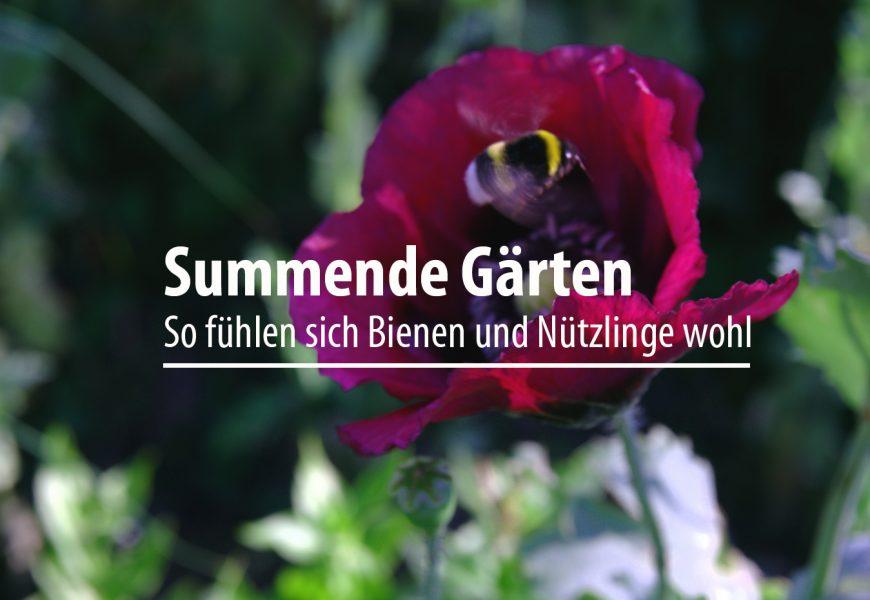 Summende Gärten: So fühlen sich Bienen und Nützlinge wohl