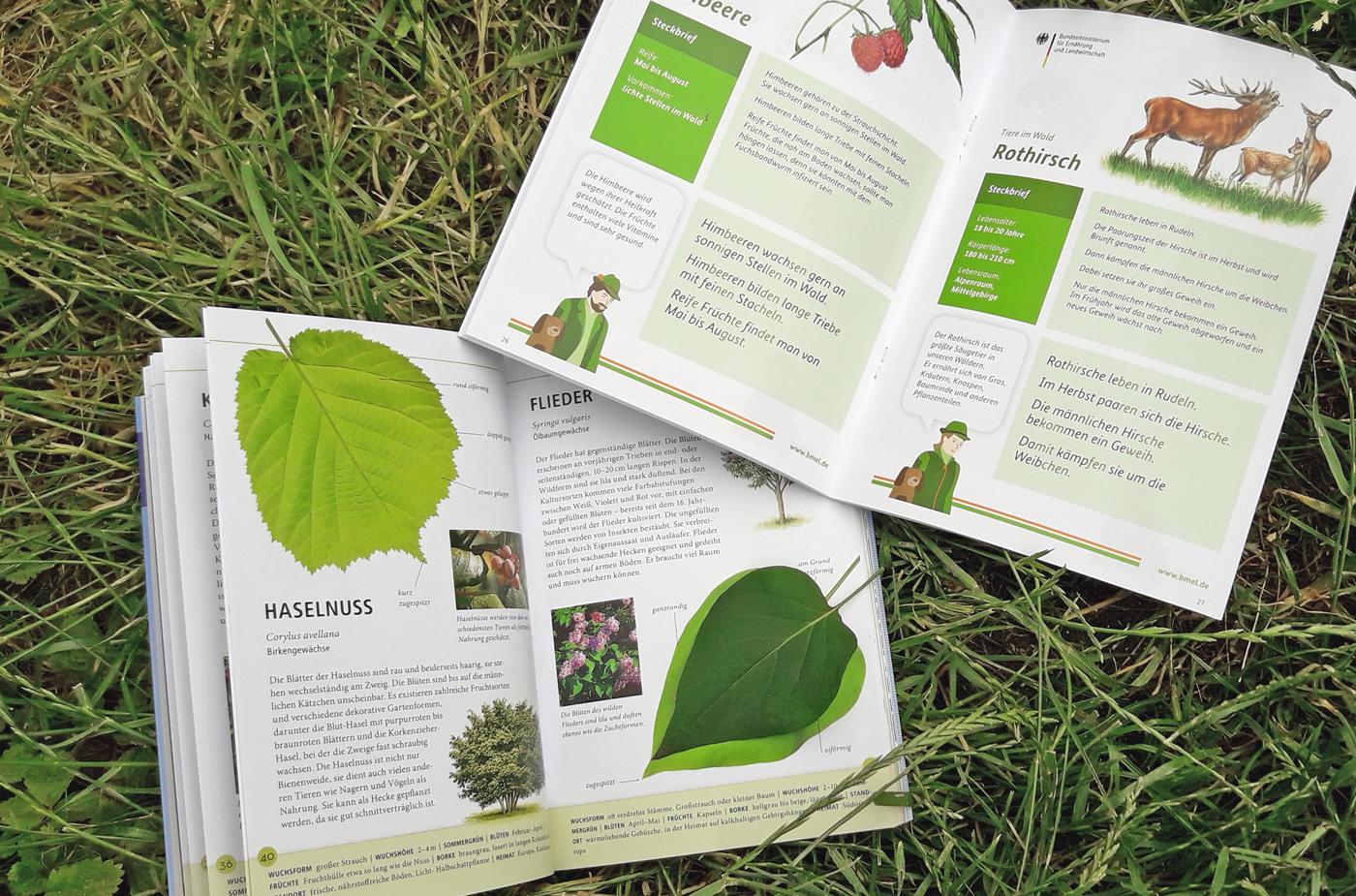 """Links unten: """"Bäume am Blatt erkennen"""" aus dem Kosmos-Verlag, rechts oben: die kostenlose Waldfibel des Bundesministeriums für Ernährung und Landwirtschaft. Foto: ForestFinance/Kristin Steffan"""