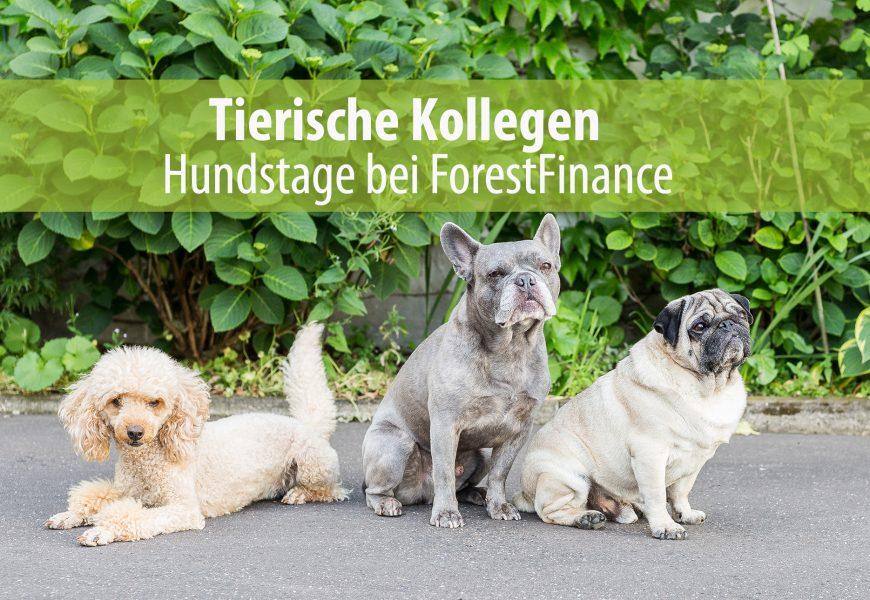 """Wie aus einem Hundebaby Kollegin Hund wurde – ein Bericht der """"Hundemama"""" und Online-Marketing-Managerin Katrin Spanke"""