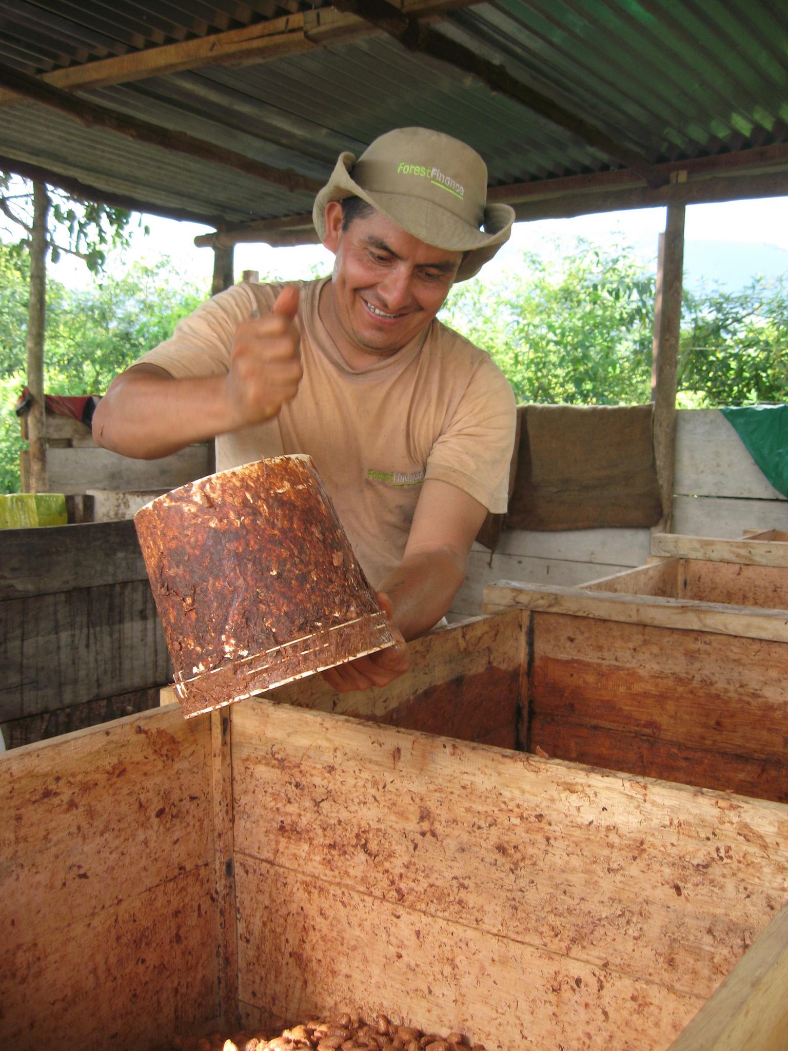 ForestFinance-Mitarbeiter Pedro Mozombite bereitet die Fermentierung der Kakao-Bohnen vor. Foto: ForestFinance
