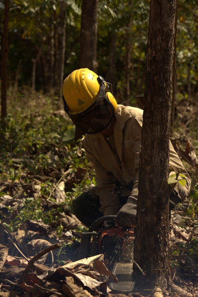 Sicherheit geht vor: Forstarbeiter bei der Durchforstung in den ForestFinance-Wäldern. Foto: Andres Espinosa/ForestFinance