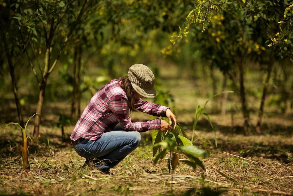 Marisol Navarro überprüft das Wachstum eines frisch gepflanzten Kakaosetzlings in Peru. Foto: ForestFinance