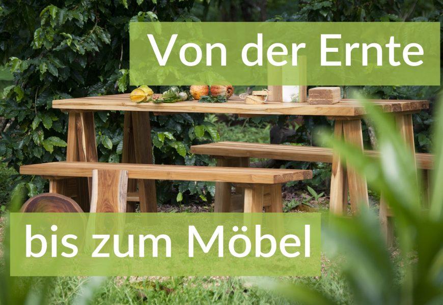 Auf dem Holzweg: Von der Ernte bis zum Möbel