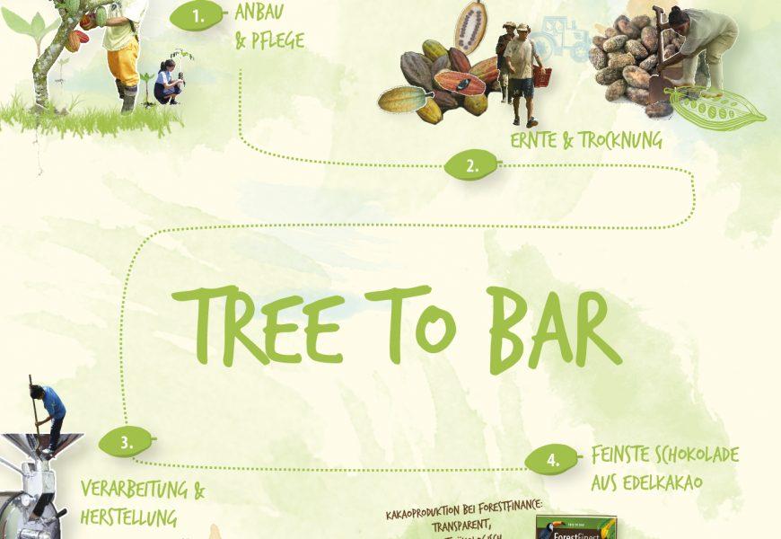 Tree-to-bar bei ForestFinance: Vom Setzling bis zur Schokolade