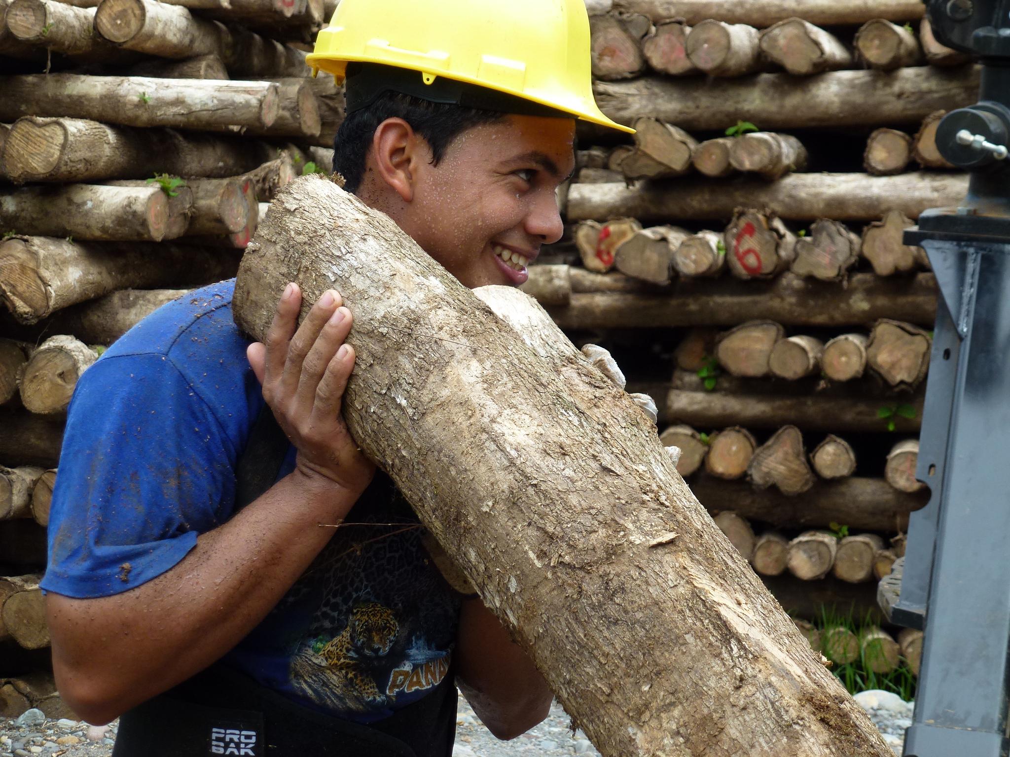 Auf der ForestFinance-Finca Boca del Monte in Panama wird nach den Durchforstungsarbeiten das geerntete Teakholz in Container verladen. Damit die Hölzer rückverfolgbar sind, werden sie entsprechend gekennzeichnet. Foto: ForestFinance