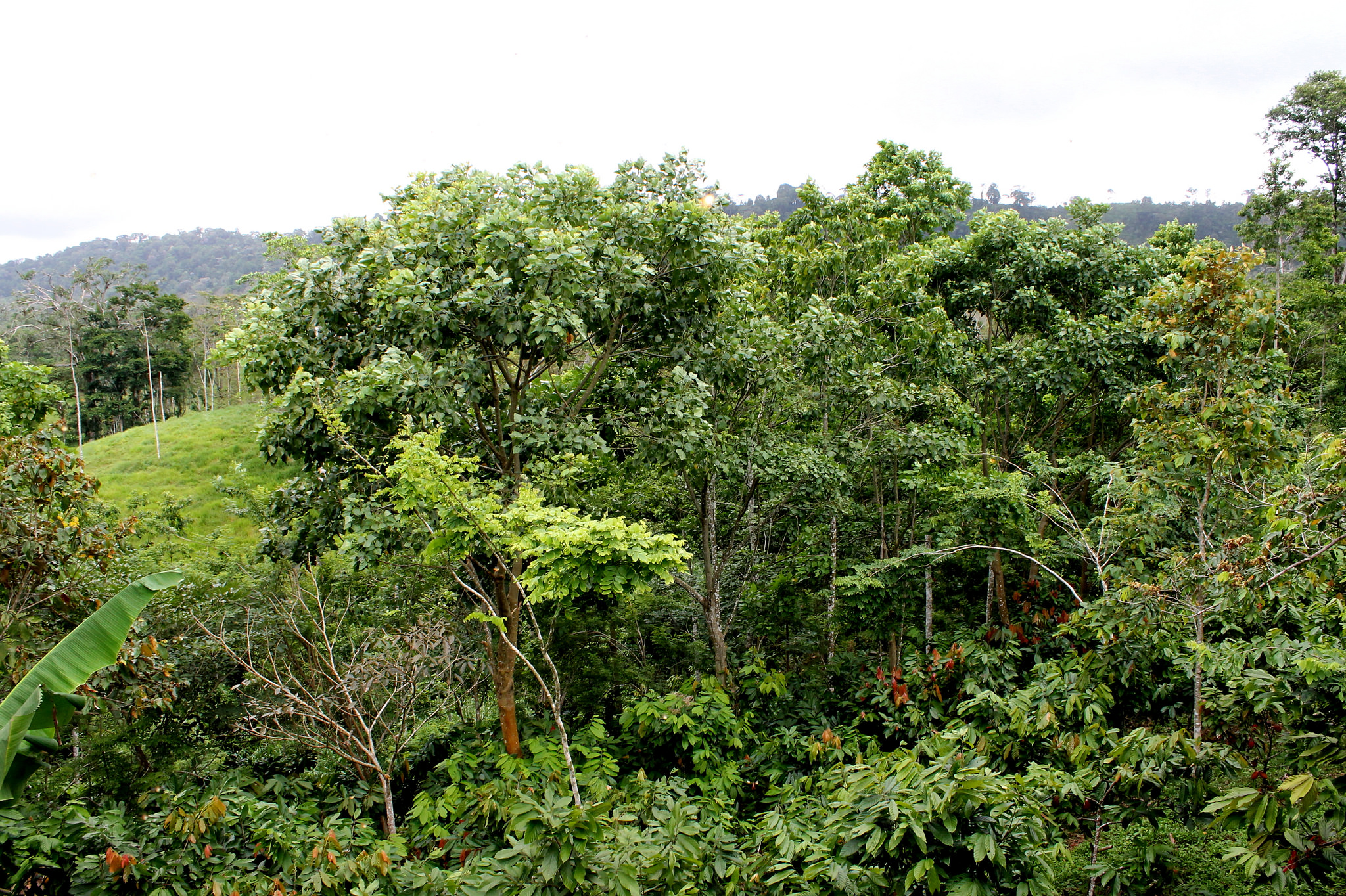 Agroforst von ForestFinance