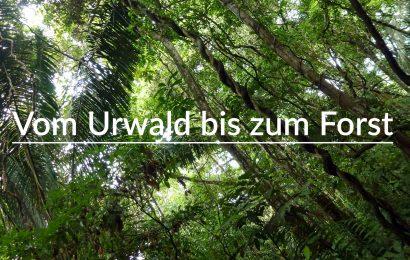 Vom Urwald bis zum Forst: Waldwissen kompakt