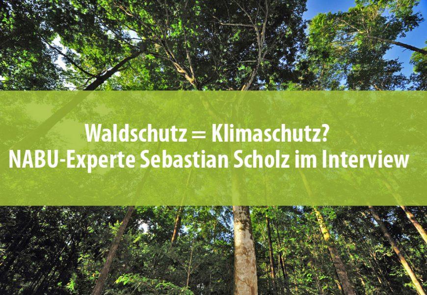 Waldschutz = Klimaschutz? NABU-Experte Sebastian Scholz im Interview