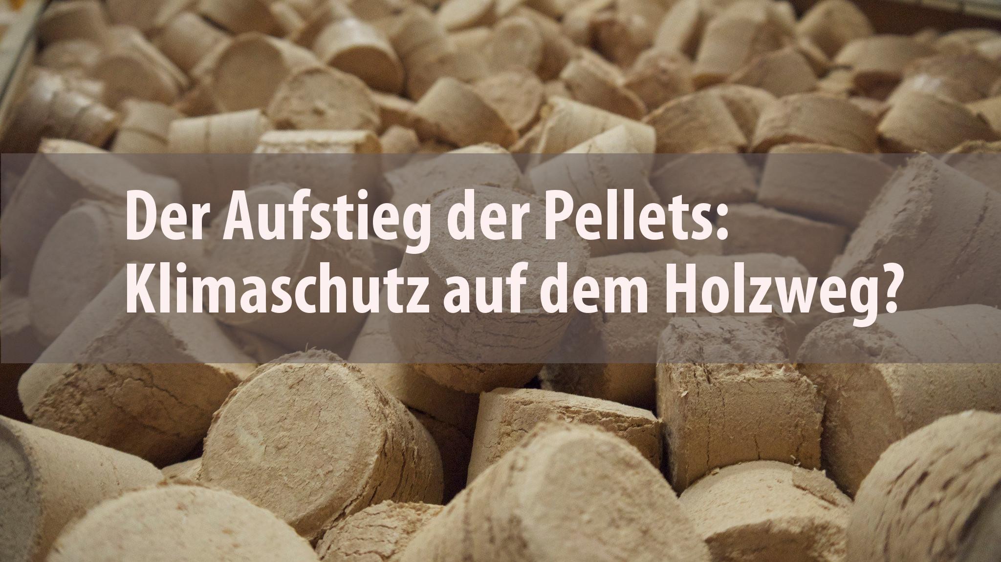Pellets aus Sägemehl, das als Abfallprodukt im Sägewerk anfällt. Foto: ForestFinance