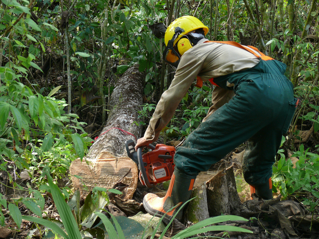Ernten ja, aber selektiv: in einem Dauerwald wie in diesem ForestFinance-Forst in Las Lajas, Panama, werden nur einzelne Hölzer entnommen, statt die gesamte Fläche zu roden. Foto: ForestFinance