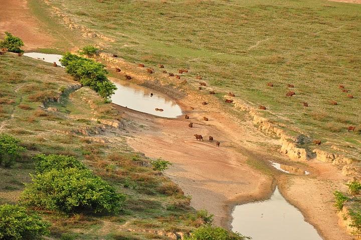 Auch in Kolumbien ist die Flächengewinnung für Viehzucht eine Gefahr für die Wälder Foto: Forest Finance
