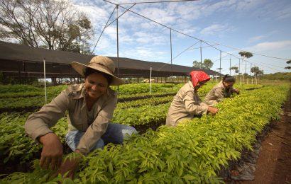 Vielfalt statt Einfalt: nachhaltige Forstwirtschaft vom Setzling bis zum Baumriesen