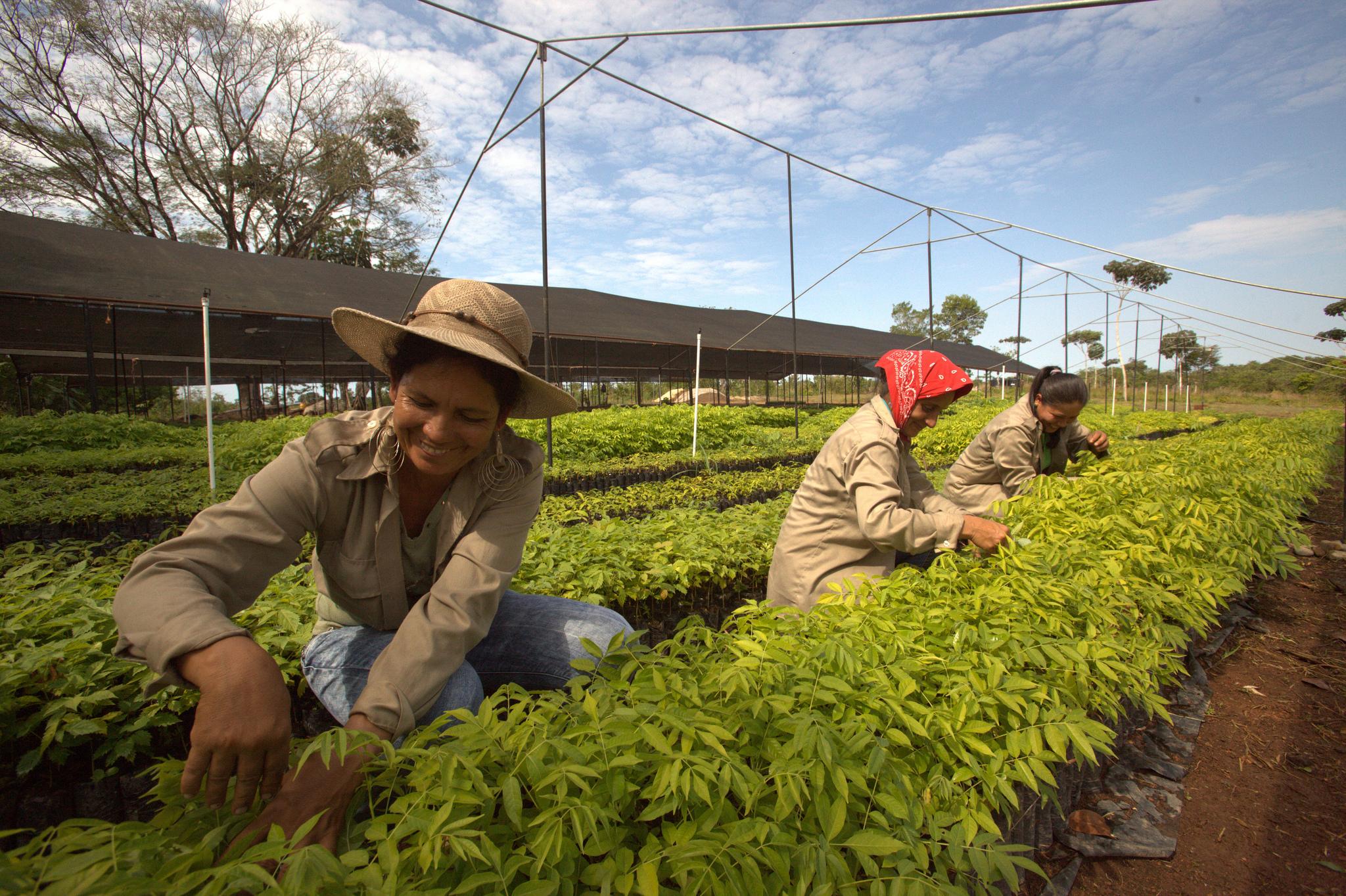 Unsere Mitarbeiterinnen der Baumschule Santa Cruz in Panama pflegen die kleinen Setzlinge. Foto: ForestFinance