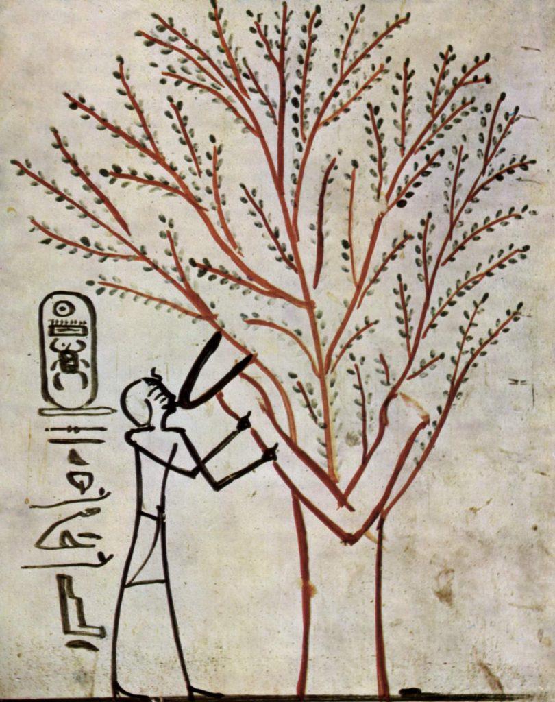 Bäume in der Mythologie waren im alten Ägypten selten und damit etwas Besonderes. Bildnis aus der Grabkammer: Thutmosis III. wird vom Heiligen Baum (Isched-Baum) gesäugt.