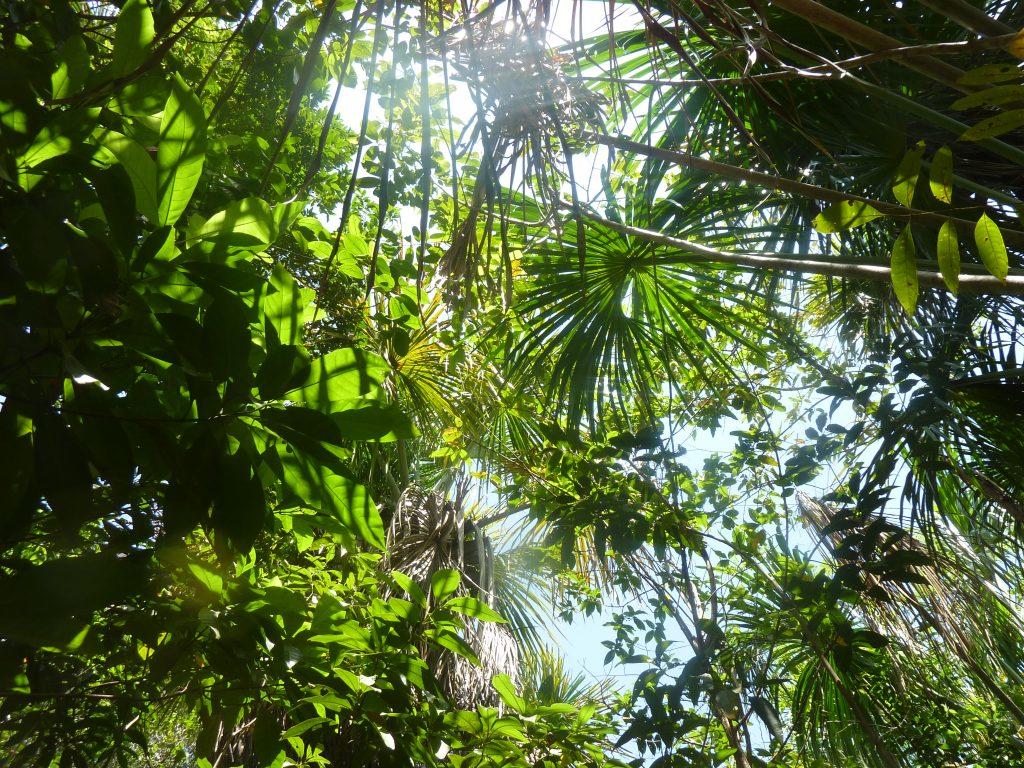 Nachhaltig in Wald investieren zum Weltspartag