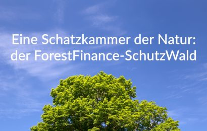 Eine Schatzkammer der Natur: der ForestFinance-SchutzWald