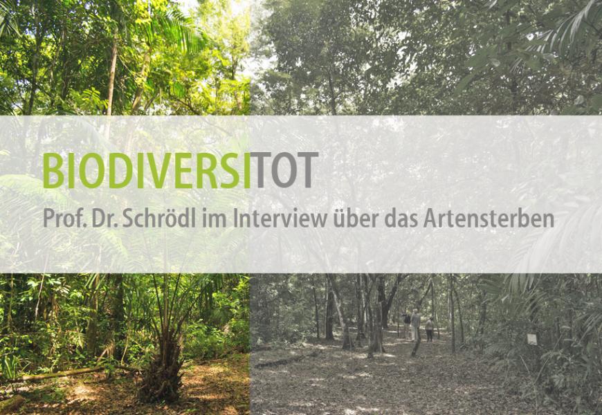 Biodiversitot – ForestFinance-Kunde Prof. Dr. Schrödl im Interview über das Artensterben
