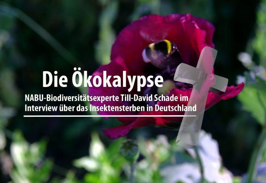 Die Ökokalypse: NABU-Biodiversitätsexperte Till-David Schade im Interview über das Insektensterben in Deutschland