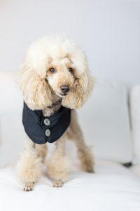 Hundemantel, faire Hundekleide, ökologische Kleidung