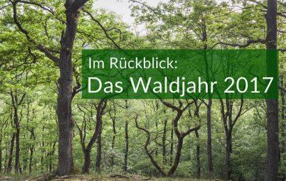 Was hat 2017 für den Wald bedeutet?