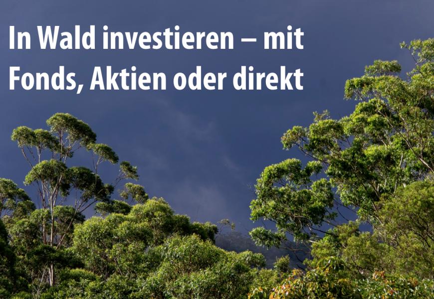 Was ist ein Waldinvestment?
