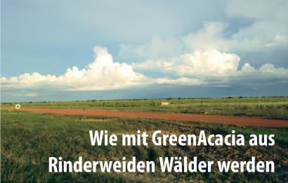 Wie mit GreenAcacia aus Rinderweiden Wälder werden
