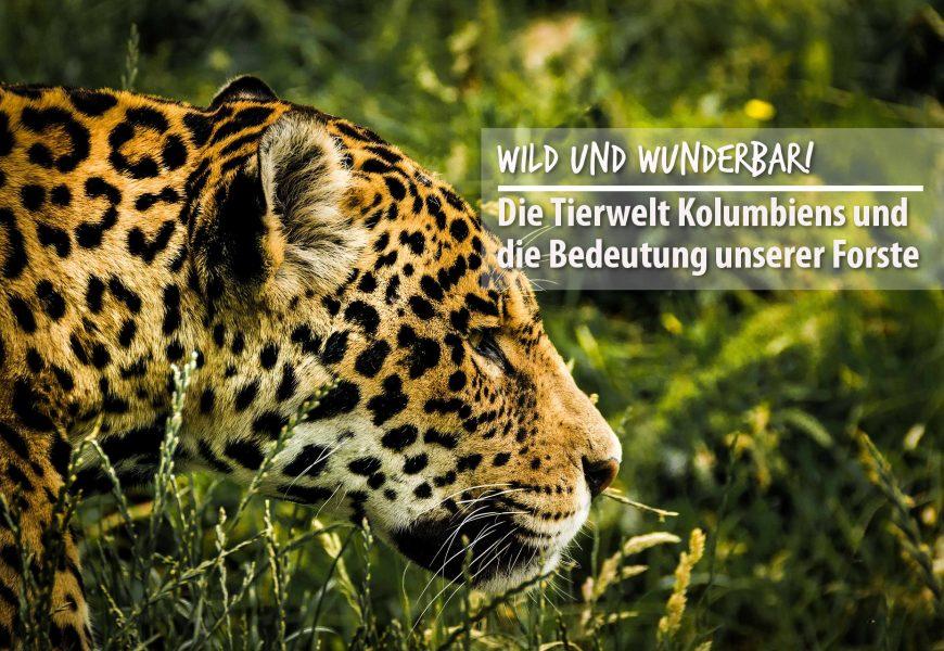 Wild und wunderbar! Die Tierwelt Kolumbiens und die Bedeutung unserer Forste