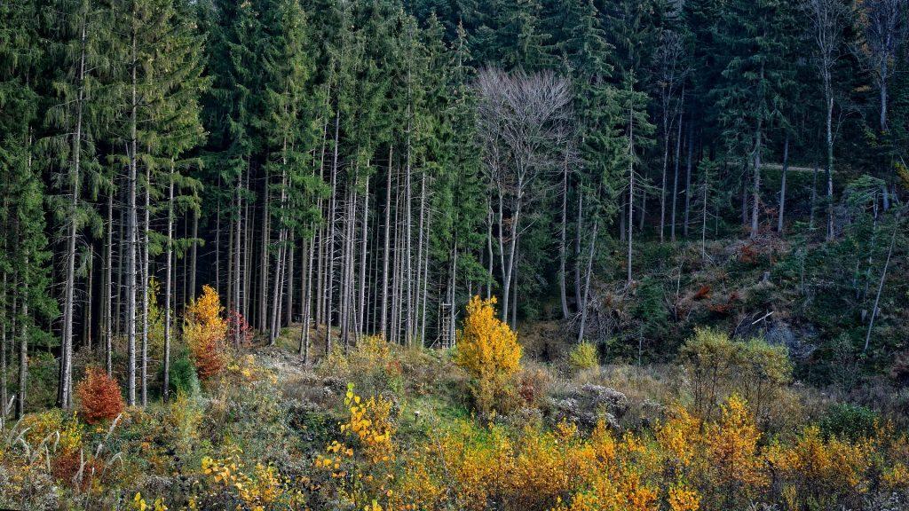 Waldinvestments als Monokulturen sind nicht nachhaltig und schädigen das Ökosystem.