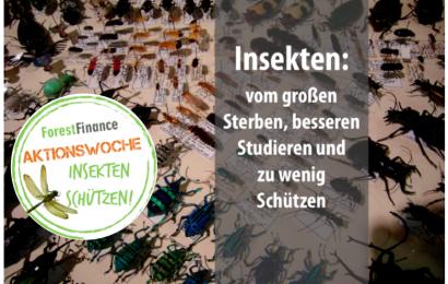 Insekten – vom großen Sterben, besseren Studieren und zu wenig Schützen
