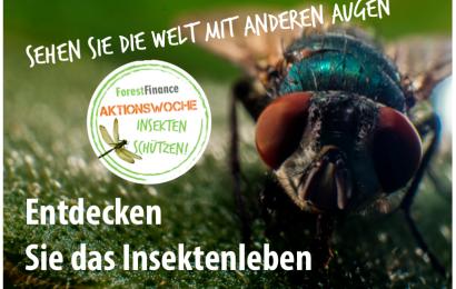 Klein, aber oho – 10 unglaubliche Fakten aus der Insektenwelt